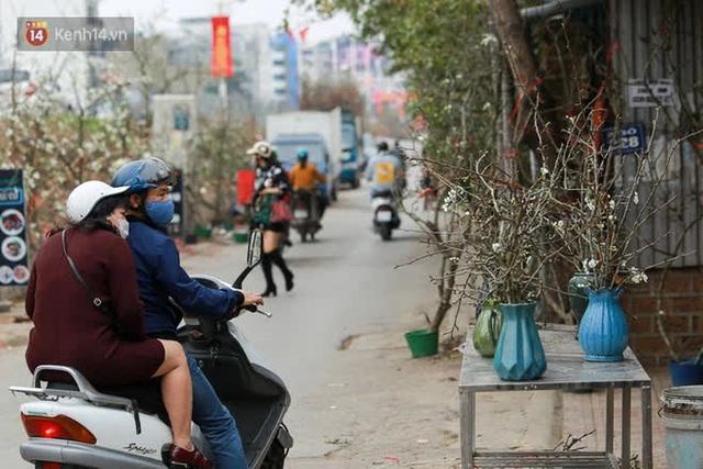 Ảnh: Hàng trăm người dân Hà Nội đổ xô đi mua hoa lê về chơi Rằm tháng Giêng - Ảnh 15.