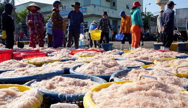 Ngư dân Bình Định kiếm tiền triệu chỉ sau vài giờ ra khơi - Ảnh 6.