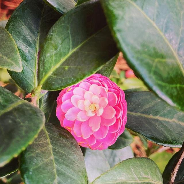 Vườn Zen gần 1ha trong tổ hợp BĐS của ông Đặng Lê Nguyên Vũ vừa khai trương: Xây theo kiến trúc chữa lành Thân – Tâm – Trí, thu vé vào cổng bằng… cây  - Ảnh 9.