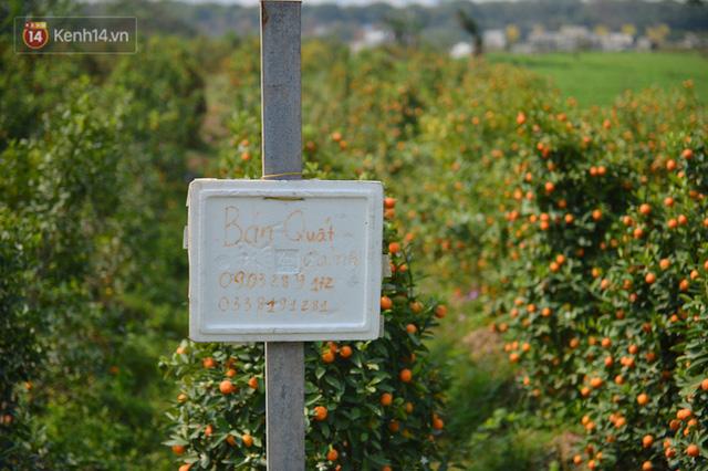 Ảnh: Hàng nghìn cây quất bonsai bạc triệu vẫn nằm im ở vườn, nông dân chẳng buồn ra đồng vì ngồi trên đống nợ - Ảnh 13.