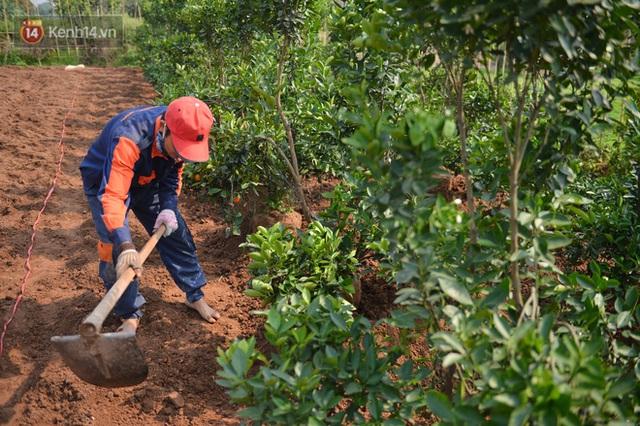Ảnh: Hàng nghìn cây quất bonsai bạc triệu vẫn nằm im ở vườn, nông dân chẳng buồn ra đồng vì ngồi trên đống nợ - Ảnh 15.