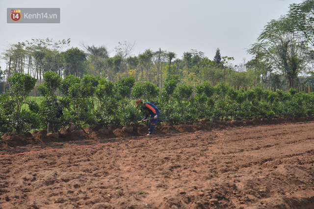 Ảnh: Hàng nghìn cây quất bonsai bạc triệu vẫn nằm im ở vườn, nông dân chẳng buồn ra đồng vì ngồi trên đống nợ - Ảnh 17.