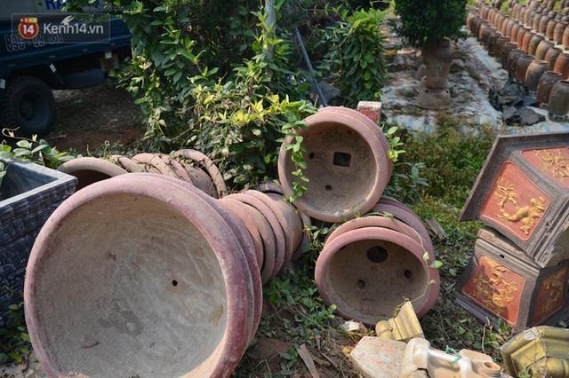 Ảnh: Hàng nghìn cây quất bonsai bạc triệu vẫn nằm im ở vườn, nông dân chẳng buồn ra đồng vì ngồi trên đống nợ - Ảnh 8.