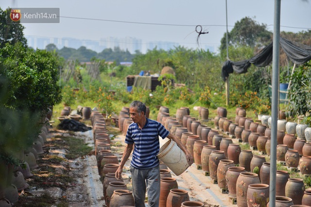 Ảnh: Hàng nghìn cây quất bonsai bạc triệu vẫn nằm im ở vườn, nông dân chẳng buồn ra đồng vì ngồi trên đống nợ - Ảnh 10.