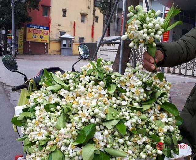 Hoa bưởi đầu mùa giá chát, chủ sạp bỏ quả bán hàng chục cân hoa, thu tiền triệu mỗi ngày - Ảnh 1.