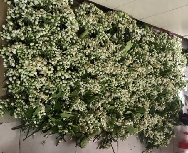 Hoa bưởi đầu mùa giá chát, chủ sạp bỏ quả bán hàng chục cân hoa, thu tiền triệu mỗi ngày - Ảnh 2.