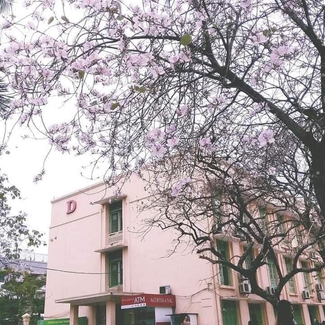 Ở Hà Nội có 1 trường đại học đẹp nhất vào mùa xuân, hoa ban nở rực khắp trời, nhưng muốn ghi danh phải xác định điểm đầu vào cao ngất ngưởng - Ảnh 2.