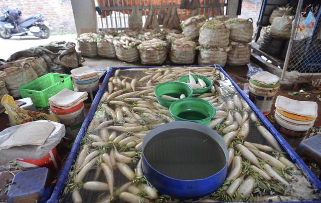 Cận cảnh người dân Hà Nội nhổ bỏ hàng trăm tấn củ cải vì không bán được  - Ảnh 14.