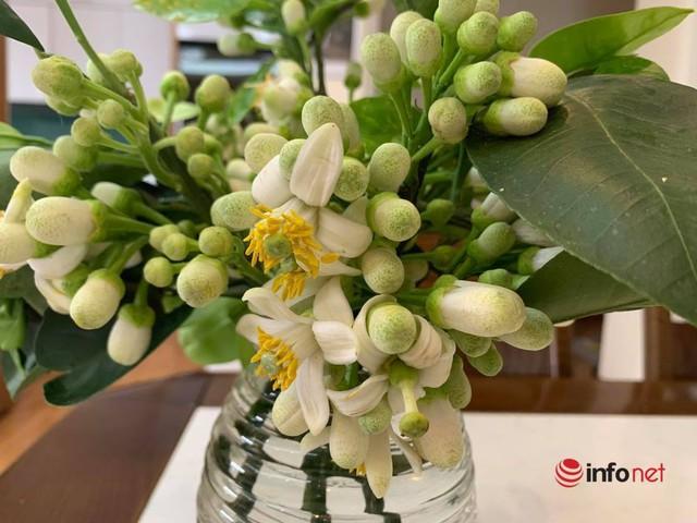 Hoa bưởi đầu mùa giá chát, chủ sạp bỏ quả bán hàng chục cân hoa, thu tiền triệu mỗi ngày - Ảnh 3.