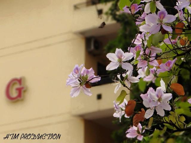 Ở Hà Nội có 1 trường đại học đẹp nhất vào mùa xuân, hoa ban nở rực khắp trời, nhưng muốn ghi danh phải xác định điểm đầu vào cao ngất ngưởng - Ảnh 4.