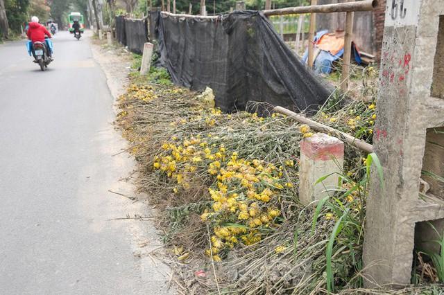 Rằm tháng Giêng, làng Tây Tựu lo sốt vó vì hoa ế ẩm - Ảnh 4.