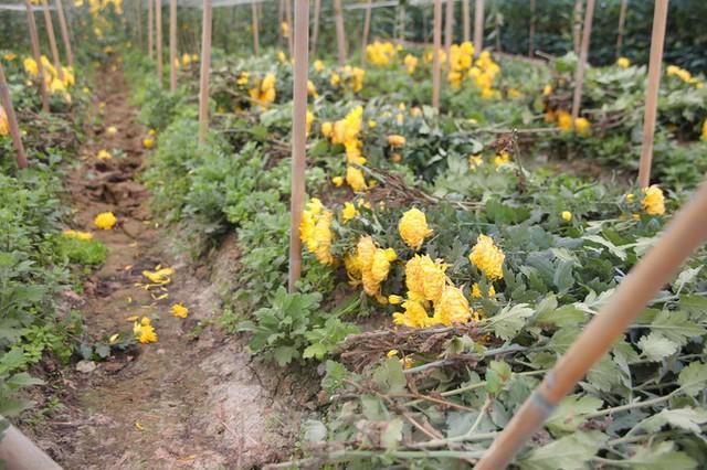 Rằm tháng Giêng, làng Tây Tựu lo sốt vó vì hoa ế ẩm - Ảnh 5.