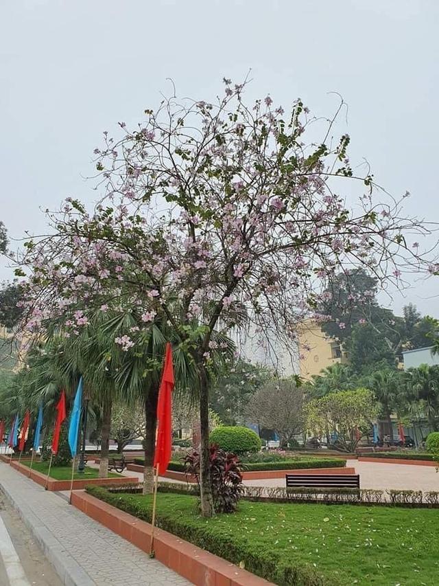 Ở Hà Nội có 1 trường đại học đẹp nhất vào mùa xuân, hoa ban nở rực khắp trời, nhưng muốn ghi danh phải xác định điểm đầu vào cao ngất ngưởng - Ảnh 7.