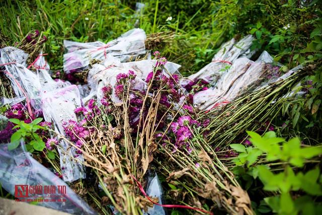 Nông dân ngậm ngùi cắt bỏ hoa do dịch Covid-19  - Ảnh 5.