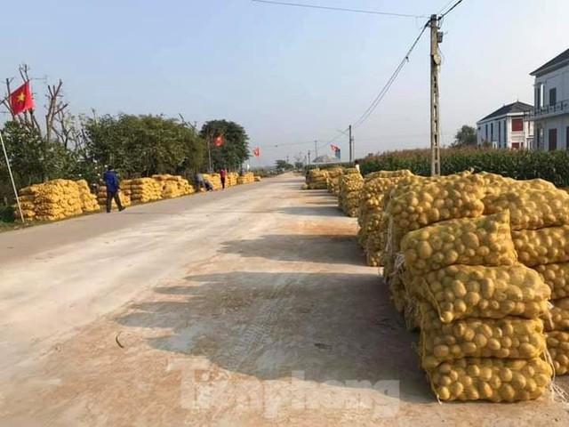 Khoai tây được mùa được giá, nông dân Nghệ An phấn khởi thu hoạch - Ảnh 9.