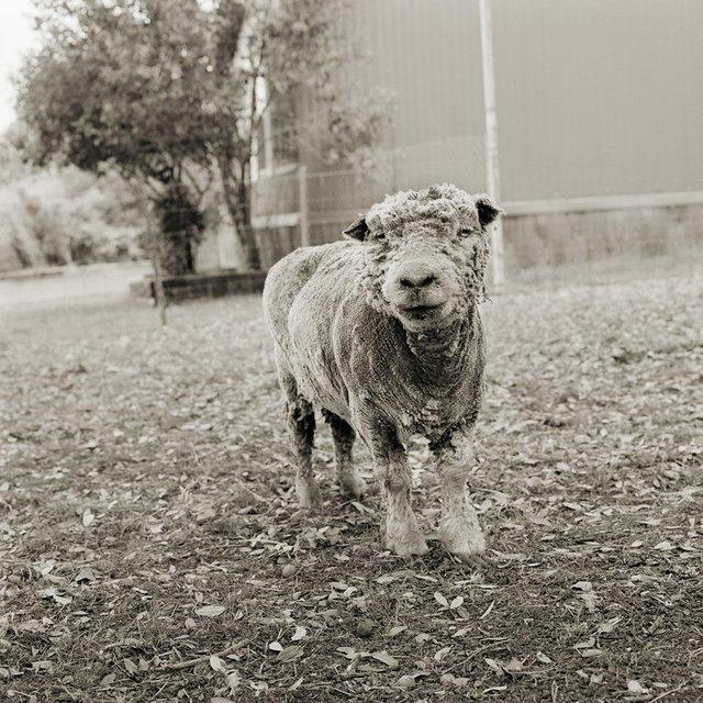 Chùm ảnh những con vật được cho phép sống đến già gây ám ảnh lạ kỳ: Khi các mảnh đời ngắn ngủi được ban tặng sự sống buồn tủi - Ảnh 12.