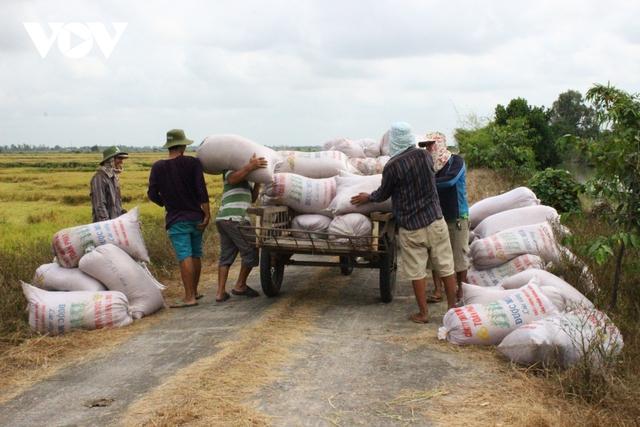 Giá lúa tăng cao, nông dân ĐBSCL thu lời gấp 2-3 lần năm ngoái - Ảnh 3.
