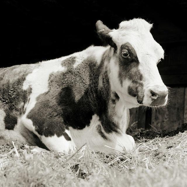 Chùm ảnh những con vật được cho phép sống đến già gây ám ảnh lạ kỳ: Khi các mảnh đời ngắn ngủi được ban tặng sự sống buồn tủi - Ảnh 3.