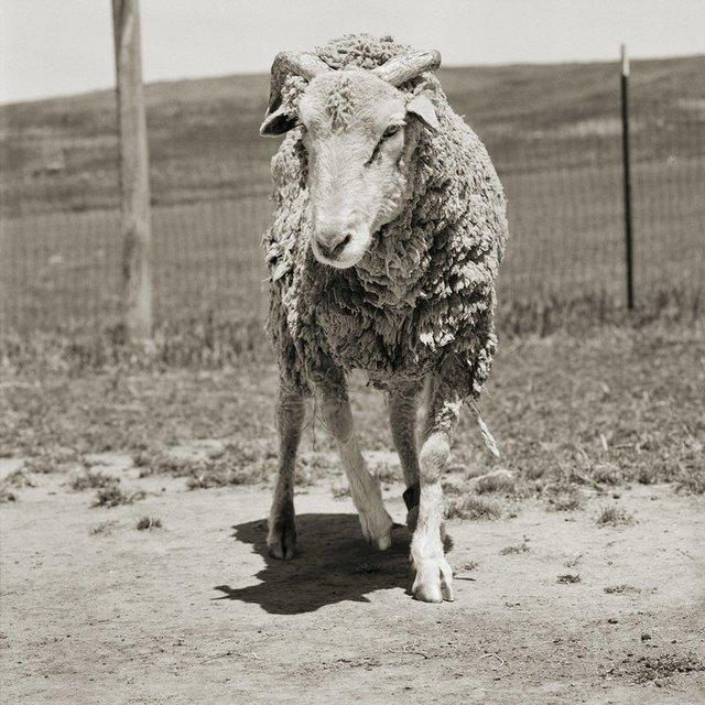 Chùm ảnh những con vật được cho phép sống đến già gây ám ảnh lạ kỳ: Khi các mảnh đời ngắn ngủi được ban tặng sự sống buồn tủi - Ảnh 4.