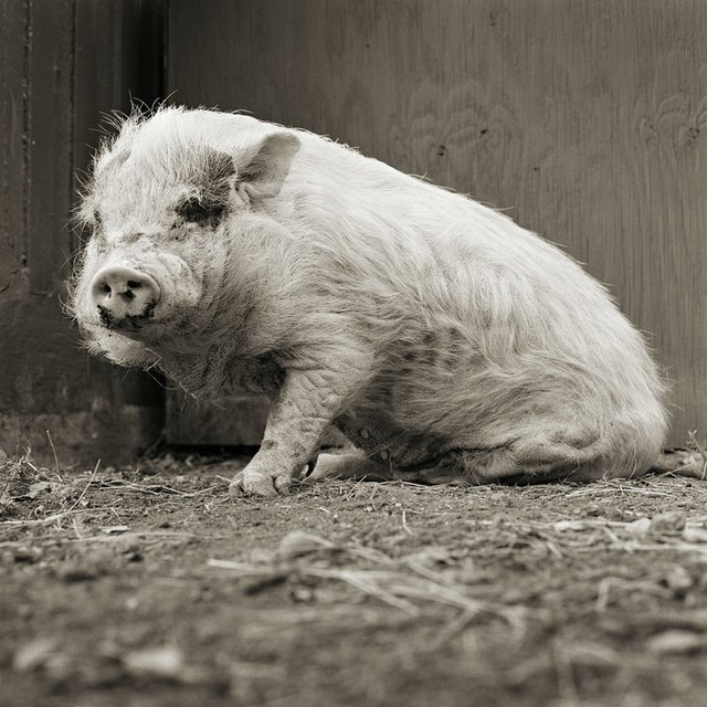 Chùm ảnh những con vật được cho phép sống đến già gây ám ảnh lạ kỳ: Khi các mảnh đời ngắn ngủi được ban tặng sự sống buồn tủi - Ảnh 5.