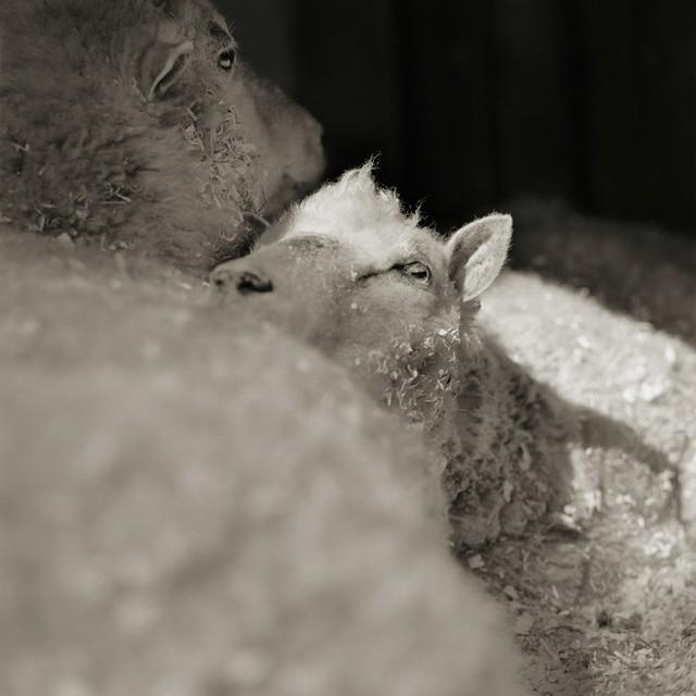 Chùm ảnh những con vật được cho phép sống đến già gây ám ảnh lạ kỳ: Khi các mảnh đời ngắn ngủi được ban tặng sự sống buồn tủi - Ảnh 8.