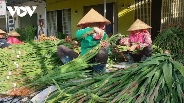 Giá rẻ không ai mua, người trồng hoa lay ơn Lâm Đồng lao đao - Ảnh 1.