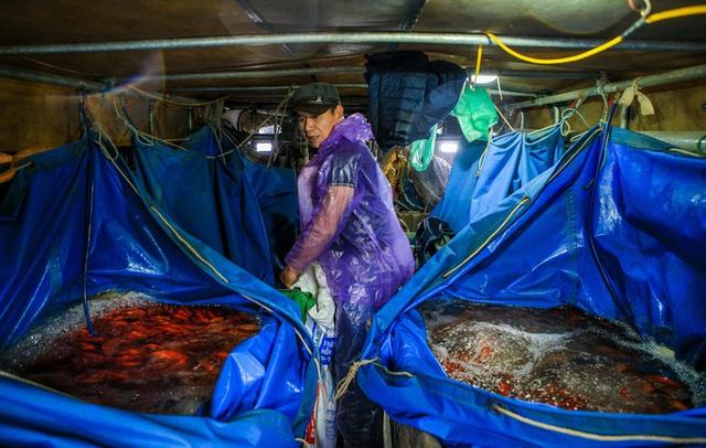 CLIP: Dịch Covid-19, chợ cá lớn nhất Hà Nội vẫn đỏ rực trước ngày cúng ông Công, ông Táo  - Ảnh 12.