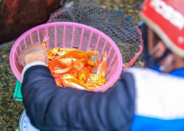CLIP: Dịch Covid-19, chợ cá lớn nhất Hà Nội vẫn đỏ rực trước ngày cúng ông Công, ông Táo  - Ảnh 17.