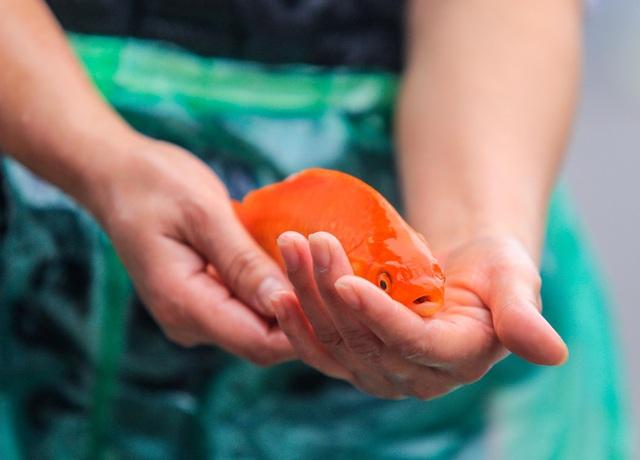 CLIP: Dịch Covid-19, chợ cá lớn nhất Hà Nội vẫn đỏ rực trước ngày cúng ông Công, ông Táo  - Ảnh 6.