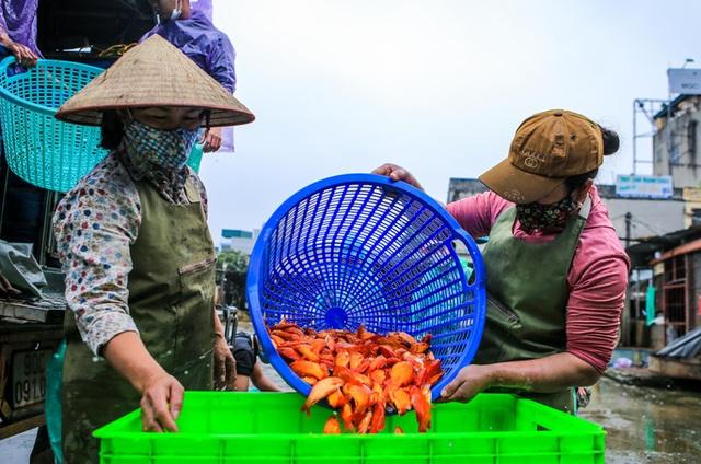 CLIP: Dịch Covid-19, chợ cá lớn nhất Hà Nội vẫn đỏ rực trước ngày cúng ông Công, ông Táo  - Ảnh 7.