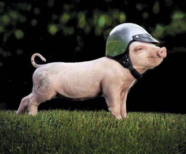 Đẻ trứng thì còn sống, không đẻ thì vào nồi: Giá trị thâm thúy học từ đàn gà mái khiến con người cũng phải tỉnh ra - Ảnh 1.