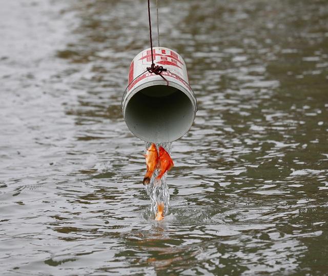 Sông hồ oằn mình gánh rác mỗi dịp tiễn ông Công ông Táo, có nên giữ tục thả cá phóng sinh hay không? - Ảnh 1.