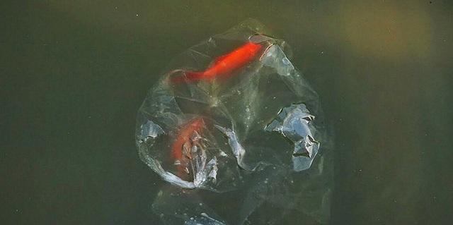 Sông hồ oằn mình gánh rác mỗi dịp tiễn ông Công ông Táo, có nên giữ tục thả cá phóng sinh hay không? - Ảnh 3.