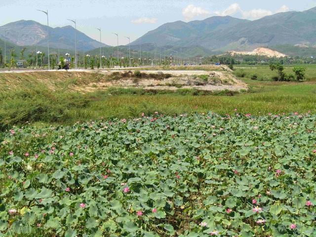 """Bình Định chấp thuận chủ trương đầu tư cho hàng loạt dự án """"khủng"""" - Ảnh 3."""