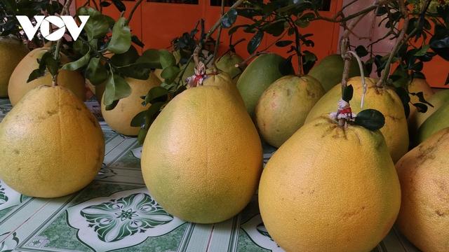 Nhà vườn trồng bưởi Thúng bán Tết giá gấp 20 lần bưởi da xanh - Ảnh 3.