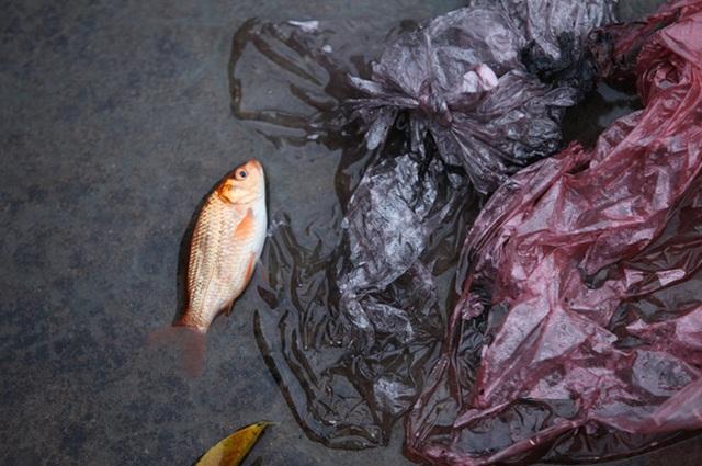 Sông hồ oằn mình gánh rác mỗi dịp tiễn ông Công ông Táo, có nên giữ tục thả cá phóng sinh hay không? - Ảnh 5.