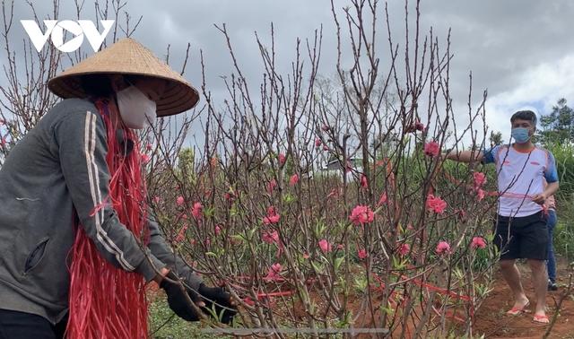 Hoa đào đất đỏ Tây Nguyên hút khách - Ảnh 3.