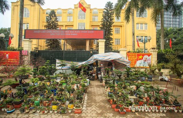 Vạn tuế bonsai của nghệ nhân Hà thành giá hàng chục triệu đồng vẫn hút khách dịp Tết - Ảnh 1.