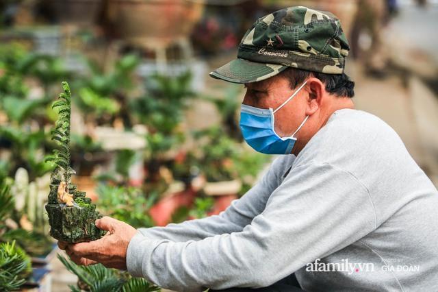 Vạn tuế bonsai của nghệ nhân Hà thành giá hàng chục triệu đồng vẫn hút khách dịp Tết - Ảnh 2.