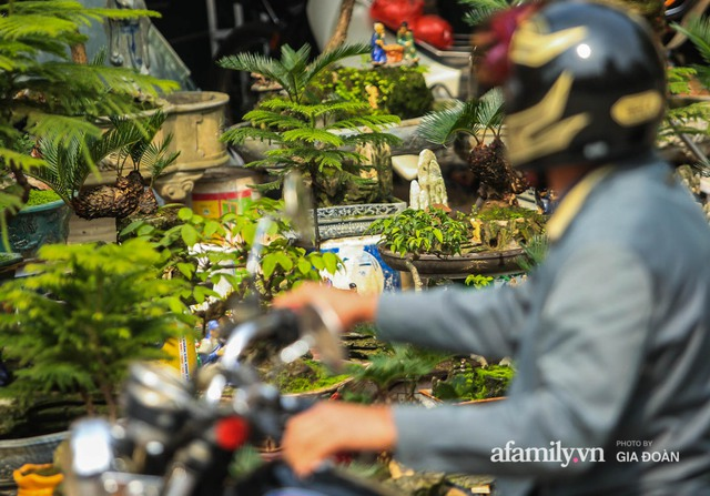 Vạn tuế bonsai của nghệ nhân Hà thành giá hàng chục triệu đồng vẫn hút khách dịp Tết - Ảnh 15.
