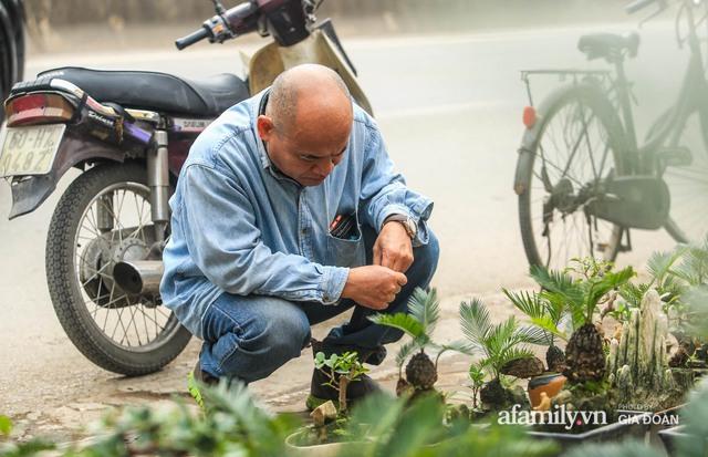 Vạn tuế bonsai của nghệ nhân Hà thành giá hàng chục triệu đồng vẫn hút khách dịp Tết - Ảnh 16.