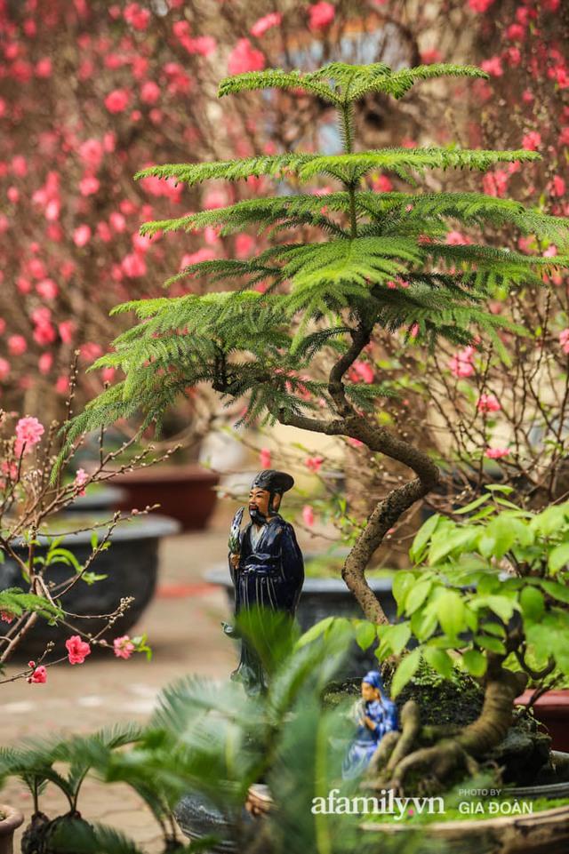 Vạn tuế bonsai của nghệ nhân Hà thành giá hàng chục triệu đồng vẫn hút khách dịp Tết - Ảnh 7.