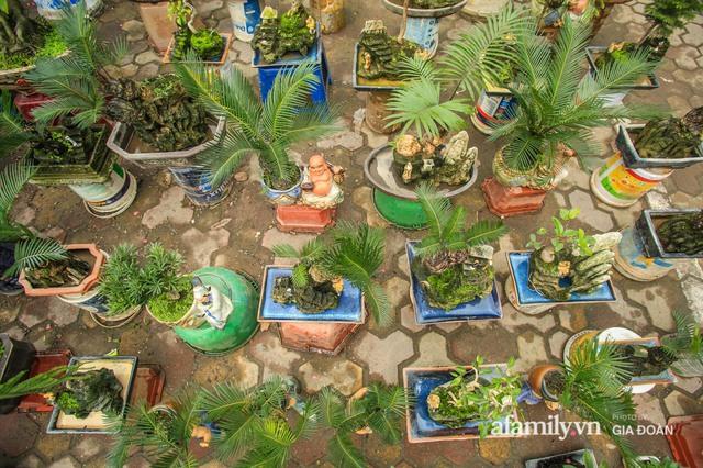 Vạn tuế bonsai của nghệ nhân Hà thành giá hàng chục triệu đồng vẫn hút khách dịp Tết - Ảnh 8.