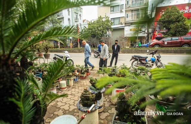 Vạn tuế bonsai của nghệ nhân Hà thành giá hàng chục triệu đồng vẫn hút khách dịp Tết - Ảnh 9.
