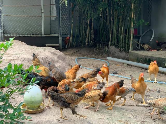Chàng trai 25 tuổi bỏ phố thị về quê xây nhà, nuôi gà và trồng rau, thành quả sau 1 năm ai nhìn cũng khen: Thu nhập ít đi nhưng hạnh phúc và an yên hơn - Ảnh 25.
