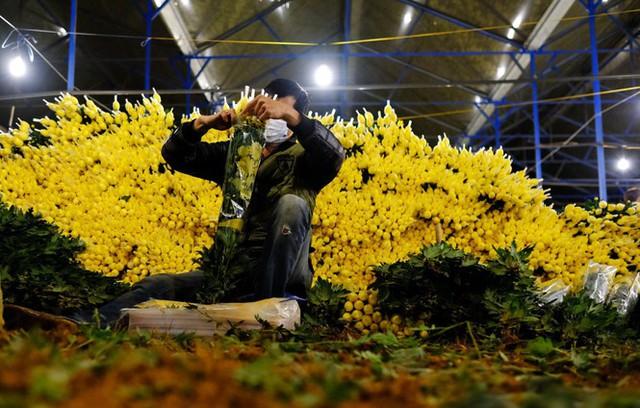 Đà Lạt: Trắng đêm thu hoạch hoa Tết chở về xuôi, công cắt hoa tăng gấp 3 lần - Ảnh 1.