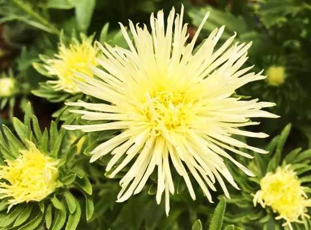Đà Lạt: Trắng đêm thu hoạch hoa Tết chở về xuôi, công cắt hoa tăng gấp 3 lần - Ảnh 3.