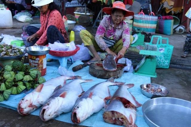 Campuchia hủy bỏ lệnh cấm nhập khẩu cá từ Việt Nam  - Ảnh 1.