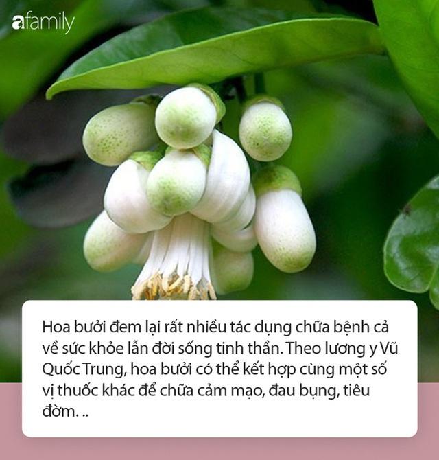 Tháng 3 mùa hoa bưởi: Vừa đẹp, thơm lại vừa làm thuốc chữa bệnh siêu hay - Ảnh 2.