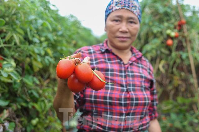 200 tấn rau củ quả ế, người dân Hà Nội đổ ngoài đồng - Ảnh 1.